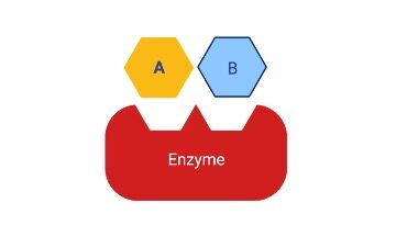 Coenzyme, Coenzyme Definition, Coenzyme Types, What is Coenzyme, Coenzyme Example,