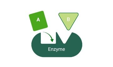 Enzyme, Enzyme Definition, What is Enzyme, Enzyme Example,