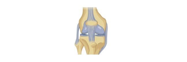 Hyaline Cartilage, Hyaline Cartilage Function, Hyaline Cartilage Location,