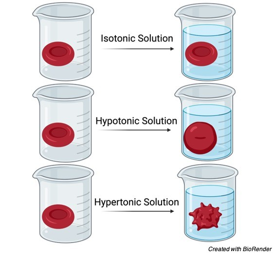 Hypotonic Solution, Tonicity, Hypotonic Solution Examples, what is Hypotonic Solution, Hypotonic Solution Definition,