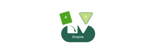 Isozymes, Isozyme, Isozymes Definition, Isozymes Examples