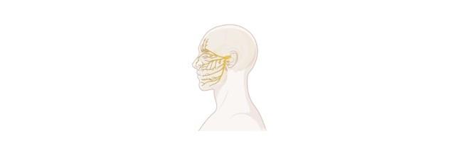 Nerve Impulse, Nerve Impulse Definition,