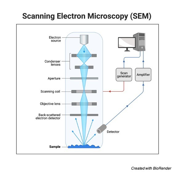 What is Electron Microscopy? Principle, Types, and Importance 2