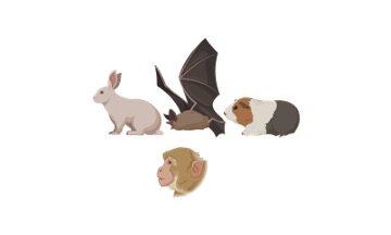Zoology, Zoology Definition,