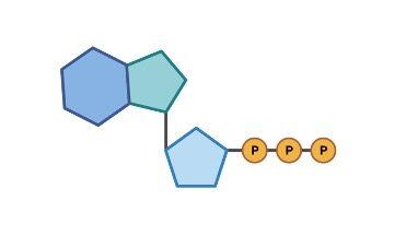 ATP or Adenosine Triphosphate