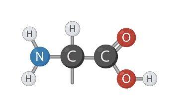 Amino Acid Chart, Amino Acid, Essential Amino Acid,