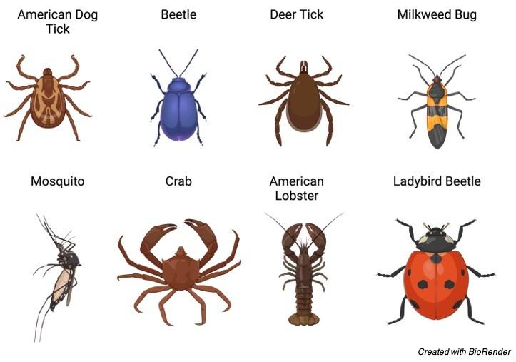 Arthropod, Arthropods, What is Arthropod, Arthropods Definition, Arthropods Example,