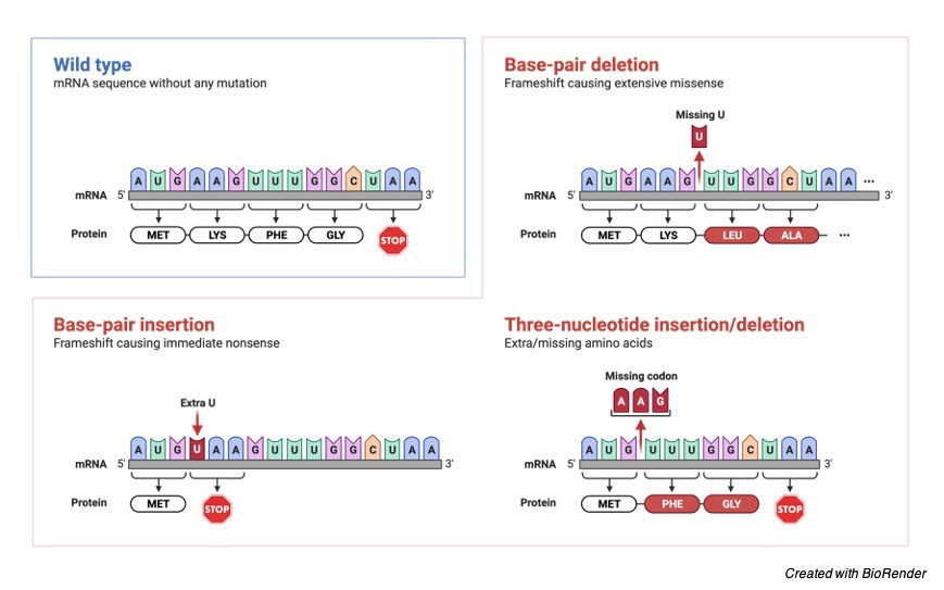 Frameshift Mutation, Frameshift Mutation Definition, What is Frameshift Mutation, Frameshift Mutation Examples, 1