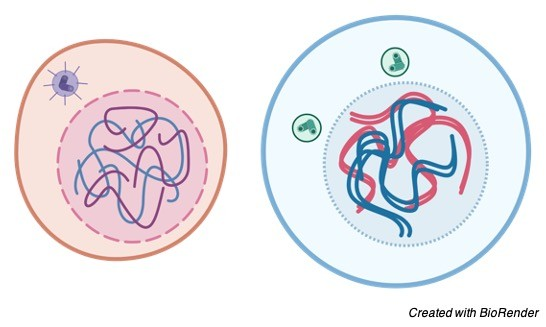 Interphase, Interphase Definition, Interphase Diagram,