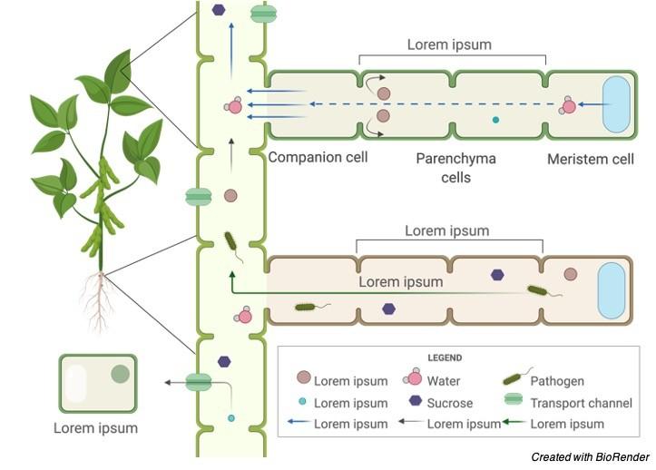 Plant Tissue, Tissue, 2 Meristem, Simple Tissue, Complex Tissues,