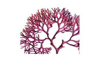Red Algae, What is Red Algae,