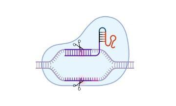 What is CRISPR Cas9