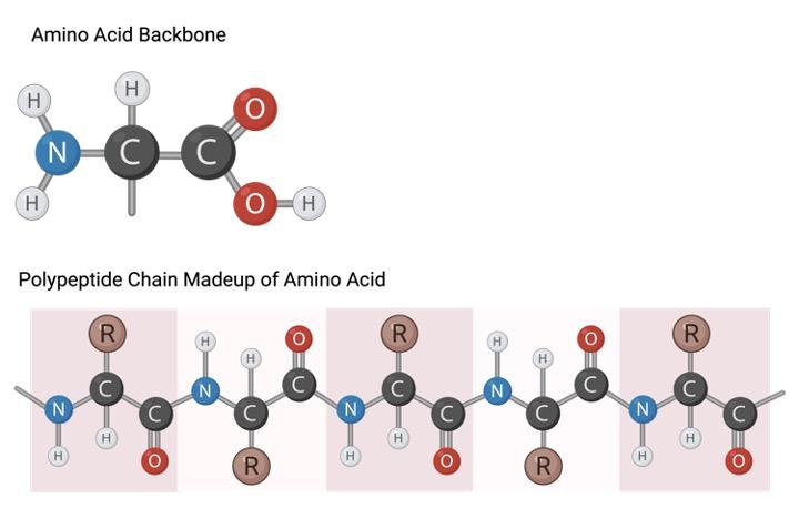 Amino Acid Chart, Amino Acid, Essential Amino Acid,2