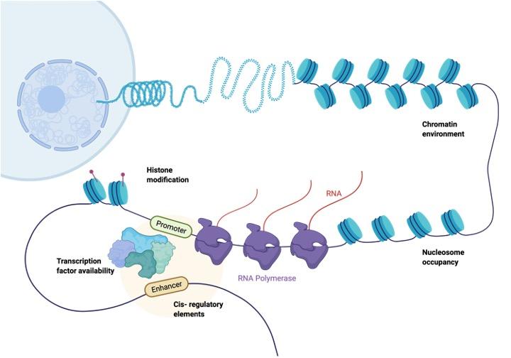 Heterochromatin, What is Heterochromatin,1