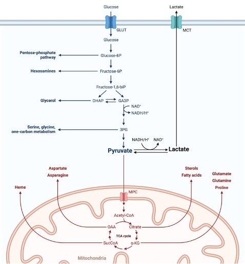 Lactate Dehydrogenase, What is Lactate Dehydrogenase, 1